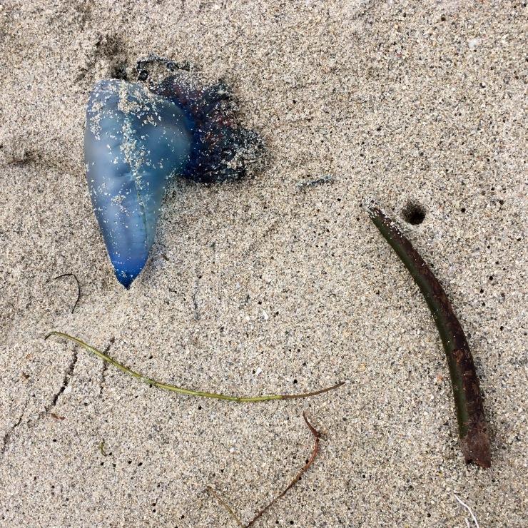 Washed Ashore 3