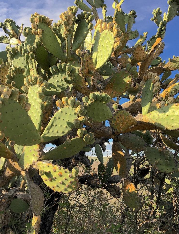 cactus tree copy.jpg