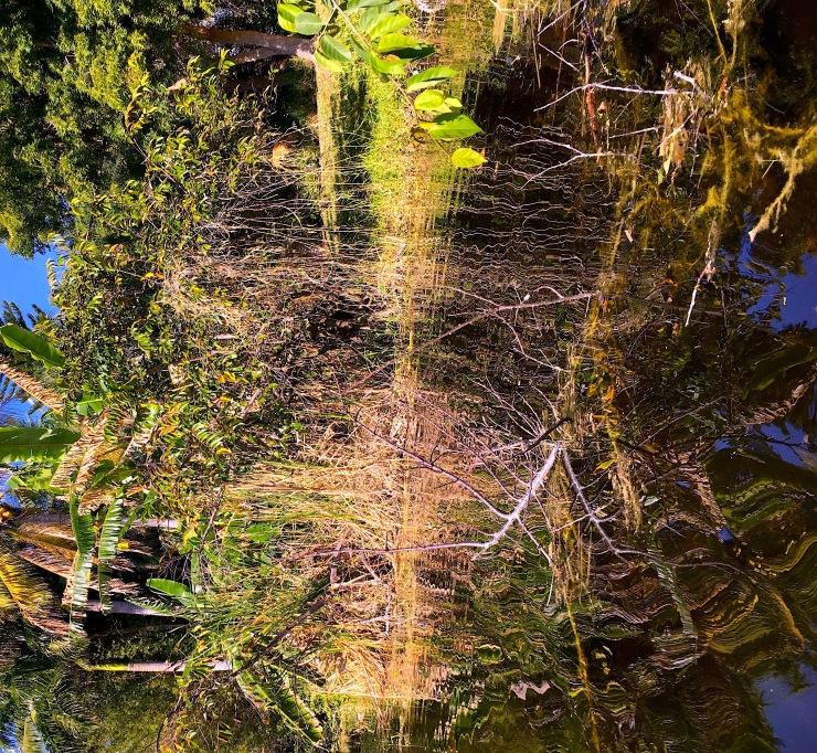 Everglades copy 2.jpg