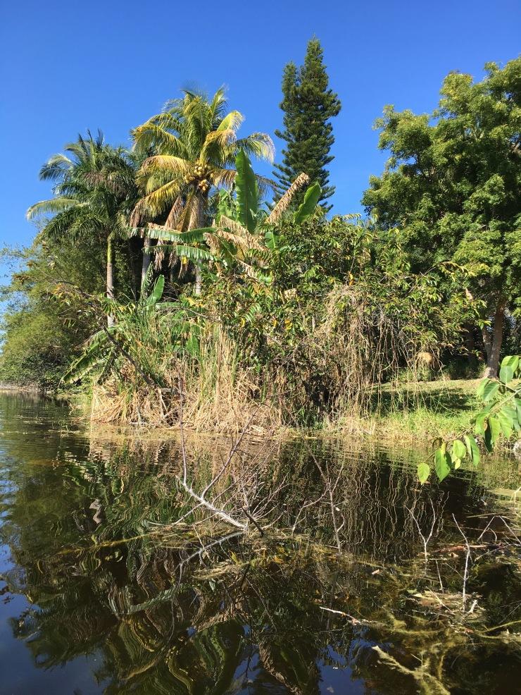 Everglades.jpeg